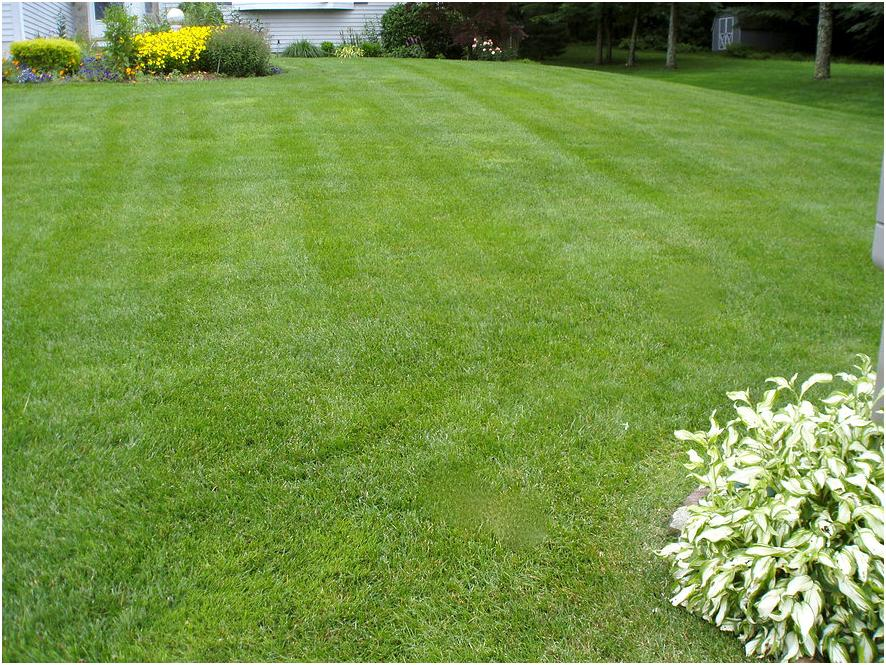Lawn Care, Organic Lawn Care, Shrub Care Seeding Avon CT Farmington CT Burlington CT Cheshire CT Plainville CT Bristol Southington CT Plantsville CT Berlin CT Kensington CT New Britain CT Meriden CT Canton CT Connecticut Hartford County and Litchfield County Durham CT Cromwell CT Middletown CT Barkhamsted CT